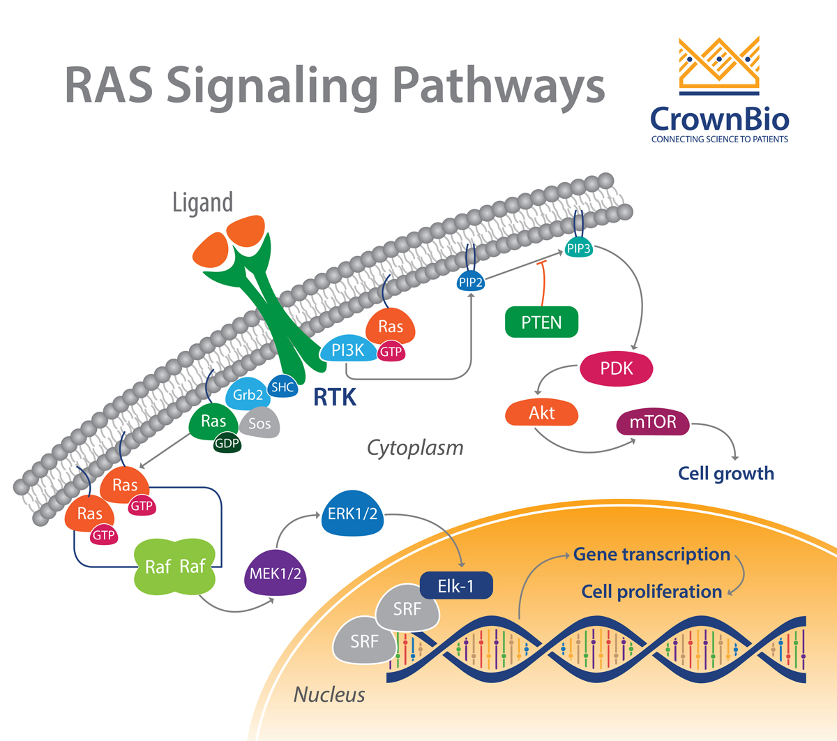 RAS: Targeting the Impossible