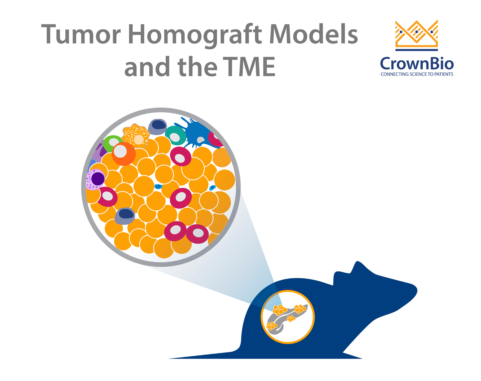 Orthotopic or Subcutaneous Tumor Homograft Models?