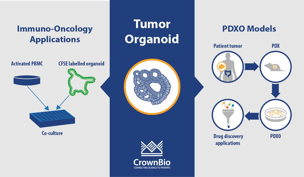 Tumor Organoid Q&A: PDXO Models and Immuno-Oncology Applications