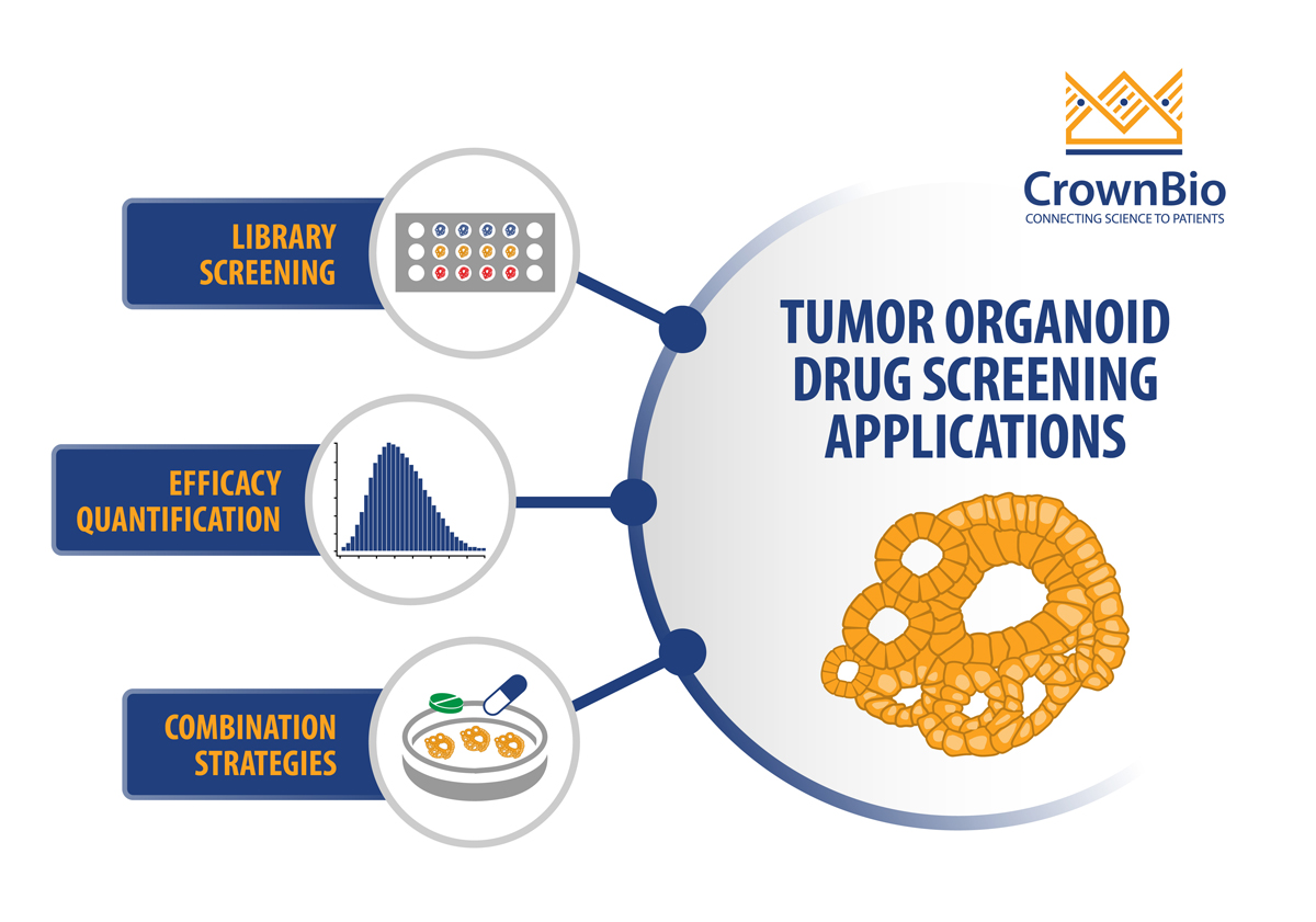 Top 3 Ways to Use Tumor Organoids for Drug Screening