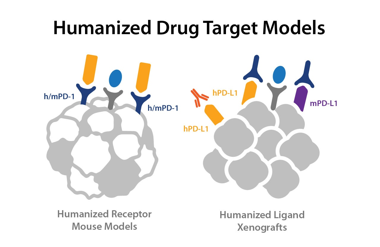 Beginners Guide: Humanized Drug Target Immuno-Oncology Models