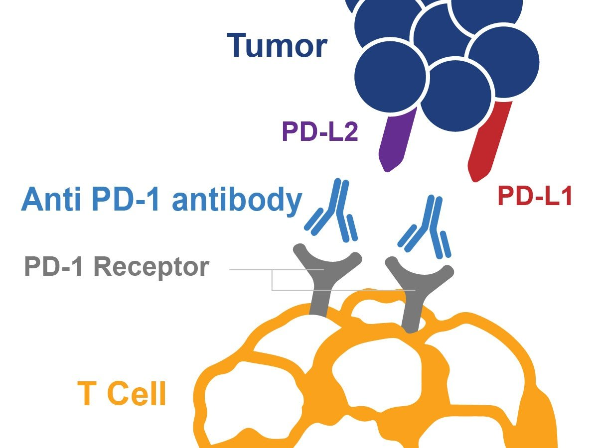 First Cancer Drug Approval Based on Biomarkers, not Tumor Location